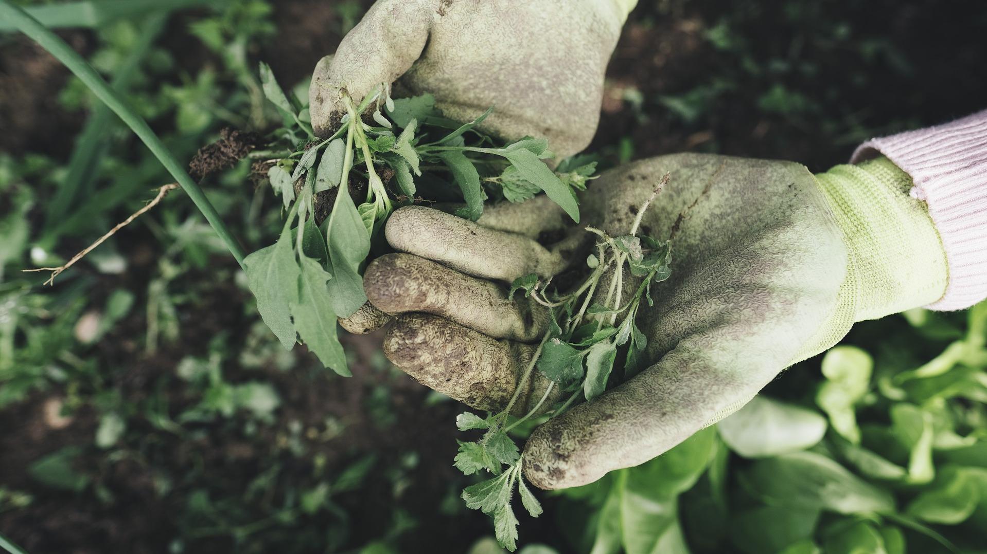 Person bei der Gartenarbeit - Mit Crowdworking lassen sich Vor-Ort-Informationen vom POS oder POI schnell und günstig beschaffen